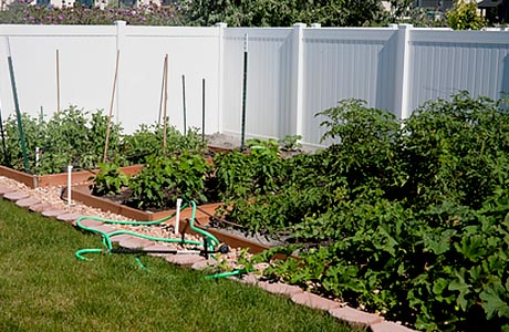 backyard-garden, organic and no chenicals