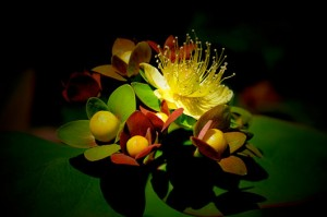 Night flowers: Explosion of Colours
