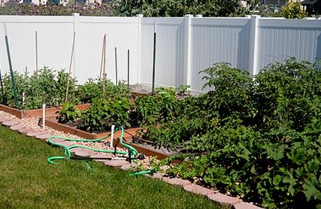 backyard-garden, organic and no chenicals